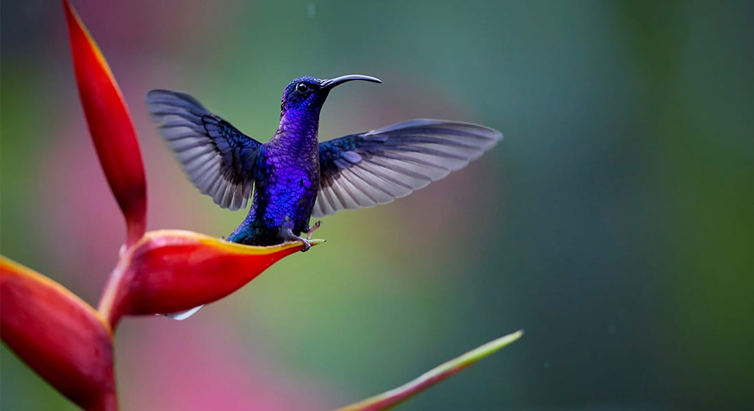 the beautiful birds of costa rica