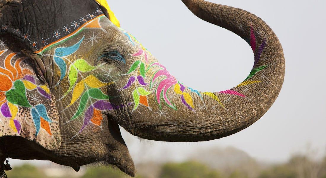 Elephant holi festival