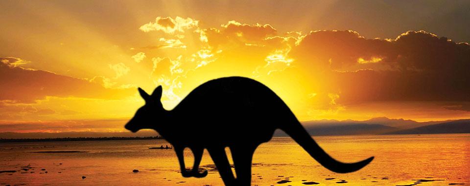 Kangaroo_28926278_FotoliaRF_2513_960x380