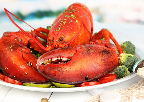 Lobster_50986473_FotoliaRF_2601_480x340