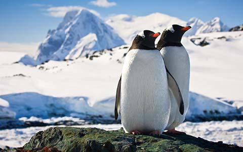 antartica sfx