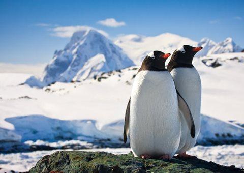 Antarctica Carousel 3