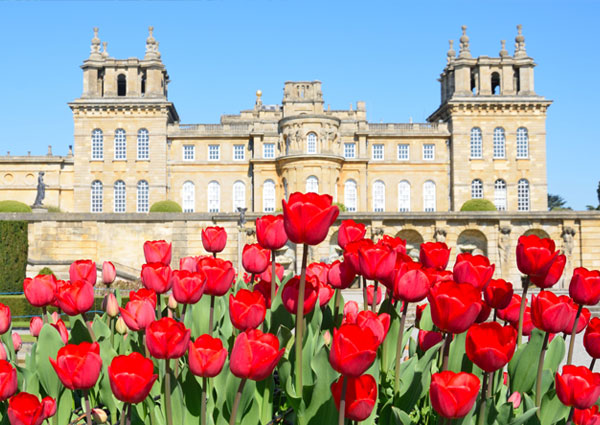Blenheim Palace Fotolia 1