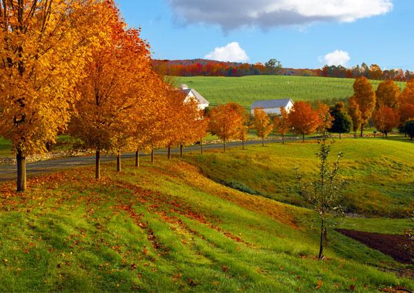 New England 3