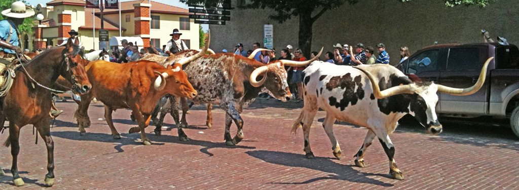 CattleDrive hero