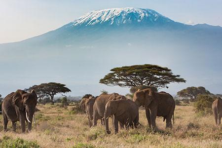 AfricaSafariKenyaTanzania Search