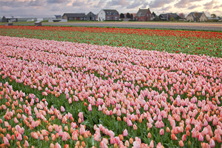 NetherlandsBelgiumFranceftFloriade Search