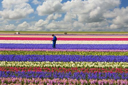 NetherlandsBelgiumFranceftFloriadeKeukenhof Search