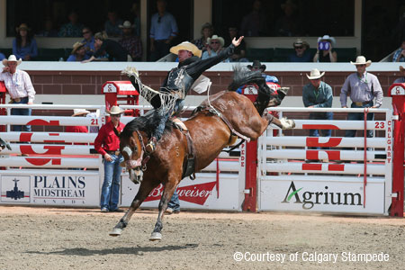 calgarystampede searchimg