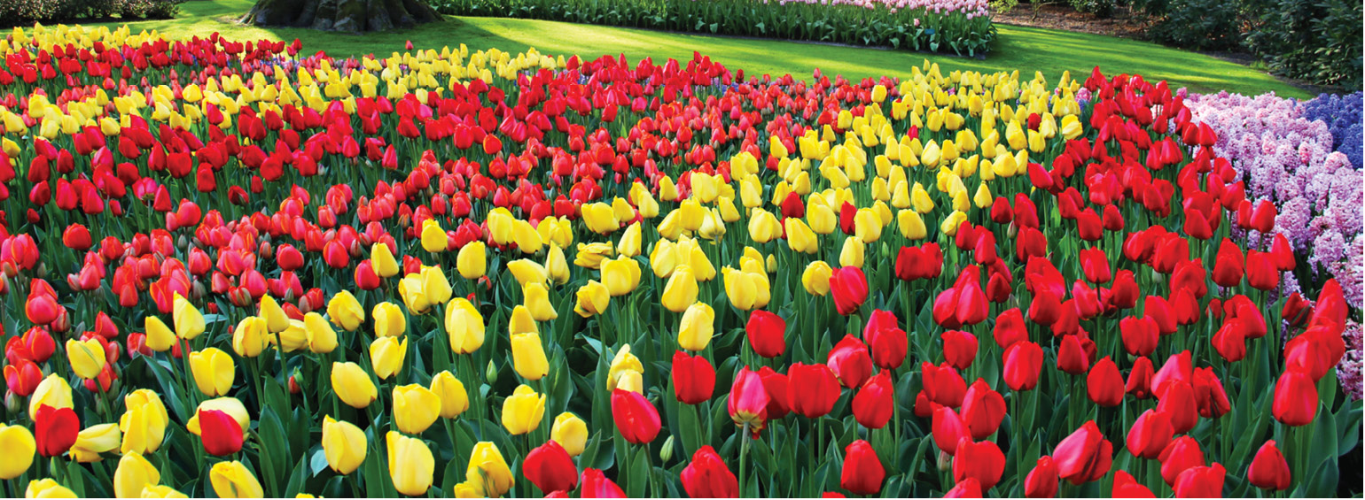 https://i.gocollette.com/tour-media-manager/tours/north-america/usa/57/packages/mackinac-island-tulip-festival-master/top-carousel/mackinacislandtulipfestival_hero1_tulips.jpg
