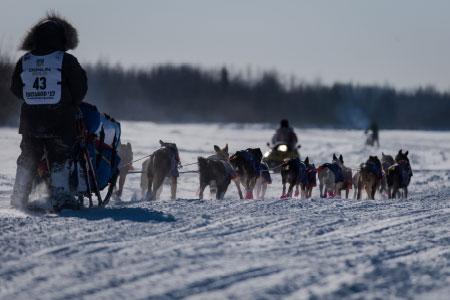 Alaskas Northern Lights Iditarod Search